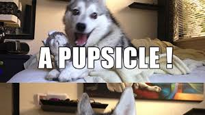 Pun Dog Meme - bad pun dog meme on imgur