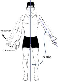 Anatomy And Physiology Definitions Adduction Definition Example U0026 Exercises Video U0026 Lesson