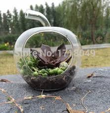 aliexpress buy glass apple pear shape terrarium air plant