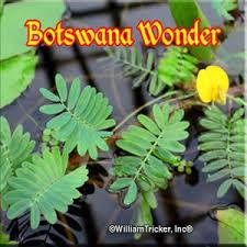 List Of Tropical Plants Names - floating aquatic plants william tricker inc