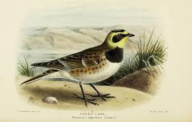 biodiversity heritage library i spy something fowl