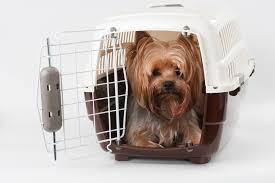 Dog Crate With Bathroom by Tips For Traveling With Your Dog