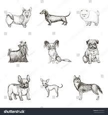 a collection sketches breed dogs isolated stock vector 633958322