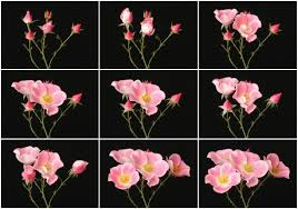 blooming flowers structures that unfold like flowers nervous system