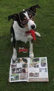 pets magazine u2013 velcro dog
