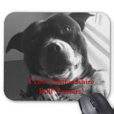 staffordshire bull terrier mouse pads zazzle