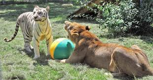welcome to wildlife toy box wildlife toy box