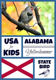 Alabama birds images State birds archives united states of america facts for kids jpg