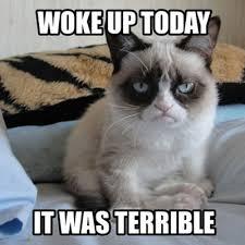 Cat Memes Tumblr - angry cat memes tumblr image memes at relatably com