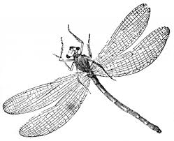 simple dragonfly coloring pages virtren com