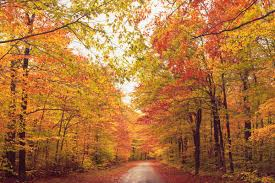 New York State Fall Foliage Map by New England Fall Foliage Best Areas To Watch The Leaves Change