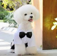 Dog Halloween Costumes Dropshipping Dog Halloween Costumes Uk Free Uk Delivery