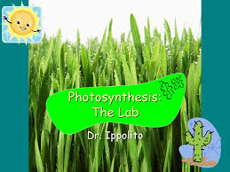 Lab Bench Photosynthesis Photosynthesis The Lab Dr Ippolito Background Ppt Download
