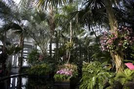 What Time Does The Botanical Gardens Close by The Orchid Show Museums In New York