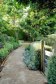 hedging plants budget wholesale nursery best 25 hedges ideas on pinterest hedges landscaping garden