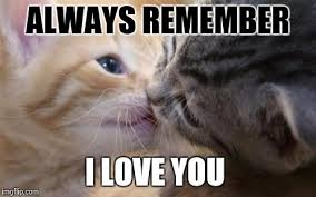 Cat Lover Meme - cute love memes for him and for her love dignity