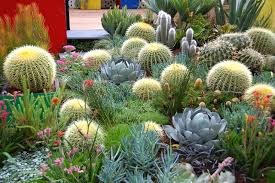 melbourne native plants file 2013 melbourne international flower and garden show