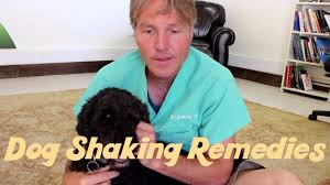 how to treat dog shaking naturally youtube