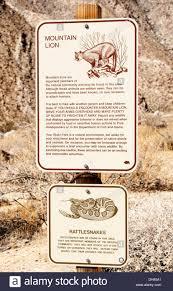 san diego county native plants california san diego county anza borrego desert state park