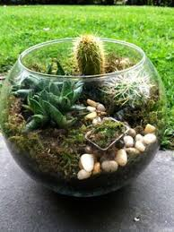 homemade terrarium layers cacti beautiful for the home