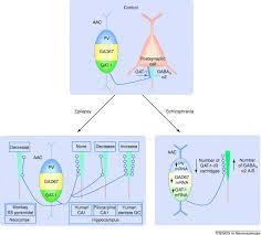chandelier cells lighting the chandelier new vistas for axo axonic cells trends