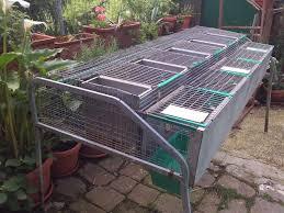 gabbie per conigli nani usate gabbie per coniglie riproduttori a grosseto kijiji annunci di ebay