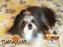 Have A Great Thanksgiving Day Pictures Keiko Shih Tzu Page 2