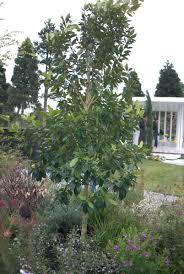 australian native garden plants native plants at the sydney garden show 2014 mallee design