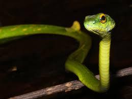 a green snake wallpapers snake wallpaper