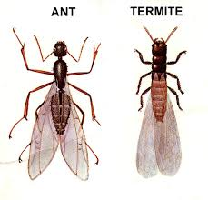 Small Red Bugs On Patio by 10 Tips On How To Control Flying Ants