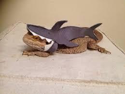 Bearded Dragon Halloween Costume Shark Clothing Bearded Dragons Monstertrims