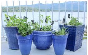 Kitchen Herb Pots Easy Diy Kitchen Herb Garden In Deck Pots The Co