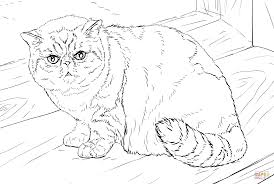 exotic shorthair cat coloring page free printable coloring pages