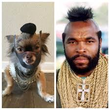 I Pity The Fool Meme - i pity the fool imgur