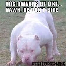 Dog Owner Meme - dog owner be like funny lol funny pictures and memes