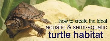 how to create the ideal aquatic u0026 semi aquatic turtle habitats