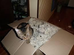 using natural wool insulation built by friends evan u0026 gabby u0027s