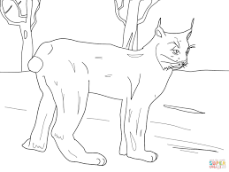 canadian lynx standing in snow coloring page free printable