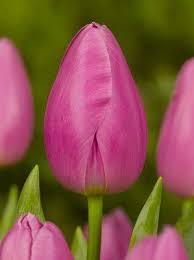 18 best flowers for garden images on pinterest flowers for