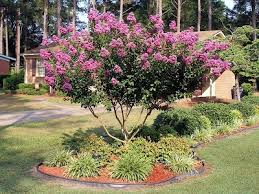 Front Yard Landscaping Ideas Florida Crepe Myrtle Landscaping Garden Pinterest Crepe Myrtle