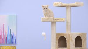 cat furniture go pet club cat trees youtube