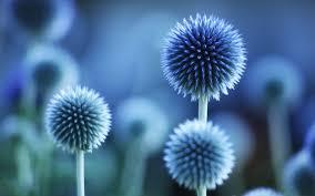 blue flower wallpaper qygjxz