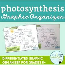 free photosynthesis graphic organizer by biology roots tpt