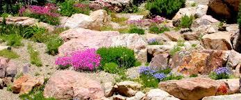rock garden collection arrowhead alpines