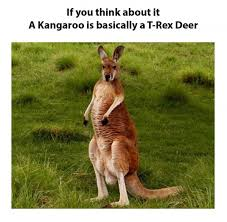 Kangaroo Meme - kangaroo is basically a t rex deer