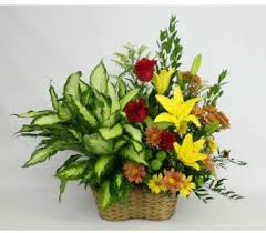 plants for funerals 91 best fresh flower memorial tribute images on