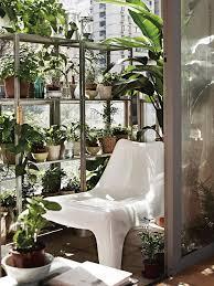 houseplants for sun loving houseplants maximise on sunny sots