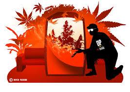 chambre de sechage cannabis la première fois cultiver facilement de l herbe en interiéur