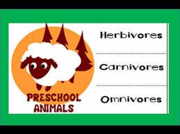 herbivore carnivore omnivore kindergarten preschool u0026 junior kids