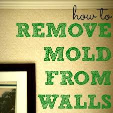 Mould Bedroom Ceiling Nice Decoration How To Get Rid Of Black Mold On Walls Pretentious